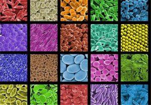 انواع نانو ذرات